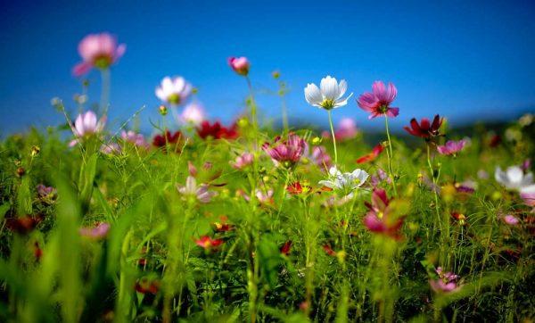 concorso-primavera-in-fiore-primopremio.net