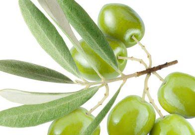 Concorso a premi Ficacci, vinci cofanetto di olive
