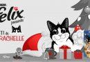 Concorso a premi Felix Purina gatti da marachelle