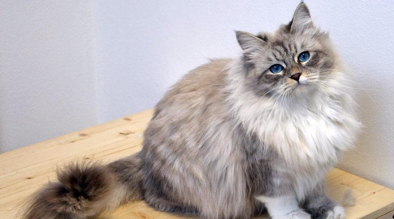 Concorso Gatti da Marachelle