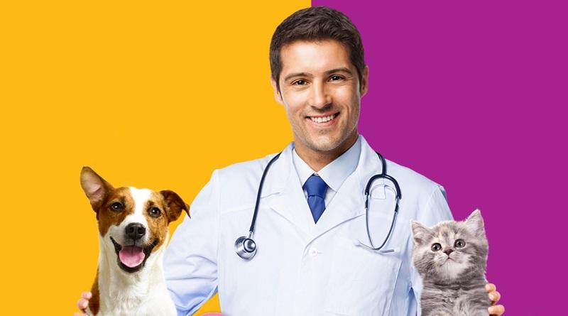Mese dell'igiene orale di cane e gatto