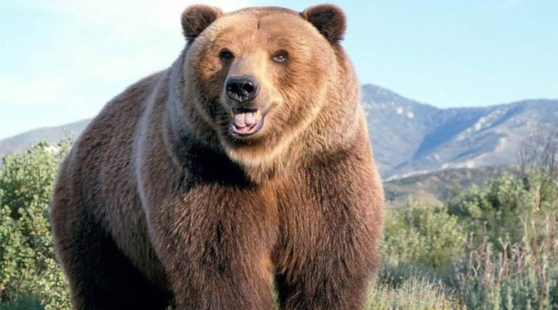 Concorso Beltè un orso per amico