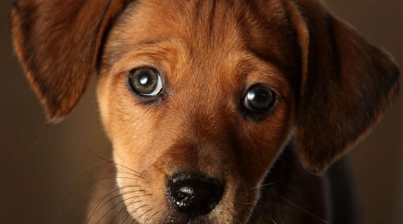 Concorso Purina Mini Dog Club