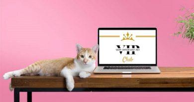 Campione omaggio cibo per gatti Schesir