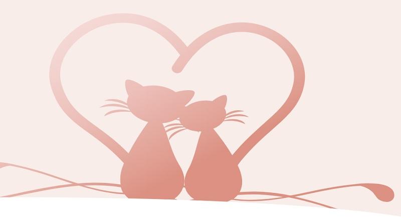 Concorso a premi Schesir di San Valentino